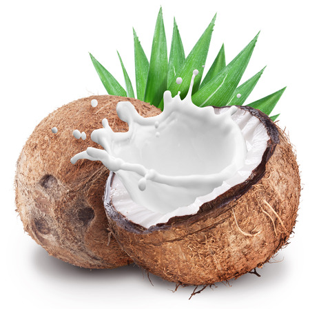 coconut leaf: Coconut with milk splash inside. File contains clipping paths.