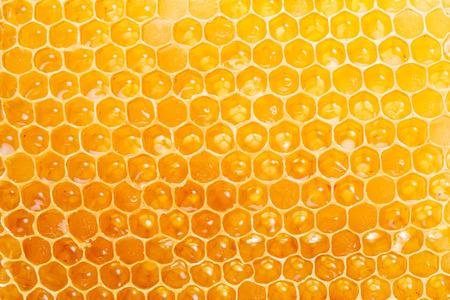 honeycomb: Honeycomb. High-quality picture. Macro shot.