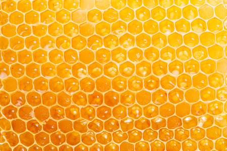 Honingraat. Hoge kwaliteit beeld. Macro schot. Stockfoto