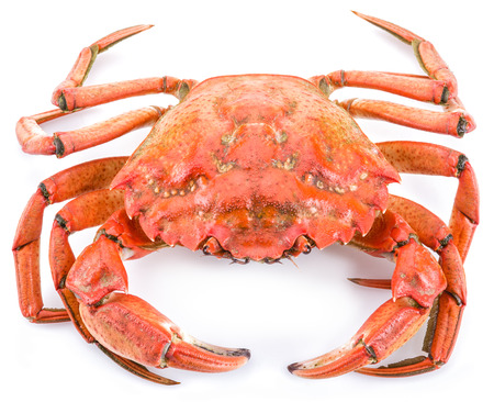 exoskeleton: Cooked crab isolated on a white background.