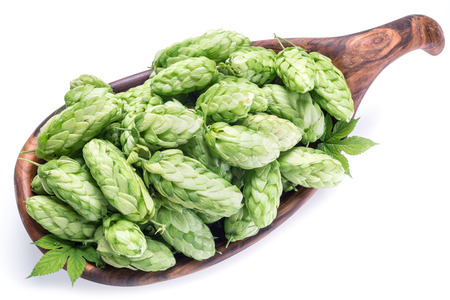 hop cones: Hop cones in the wooden bowl. Isolated on the white background.