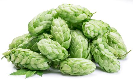 hop hops: Hop cones. Isolated on white background.
