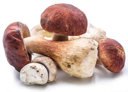 cepe: Porcini mushrooms isolated on a white background. Stock Photo