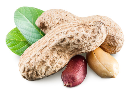 monkey nuts: Peanuts with leaves.  Stock Photo