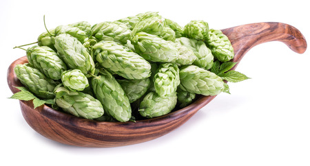 ferment: Hop cones in the wooden bowl. Isolated on the white background.