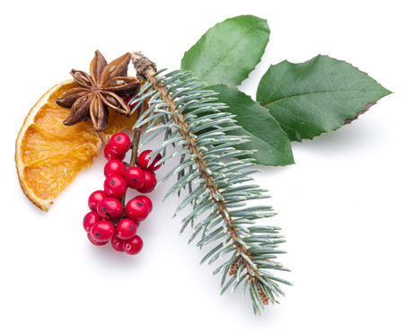 furtree: European Holly, anise star and fur-tree branch white background.