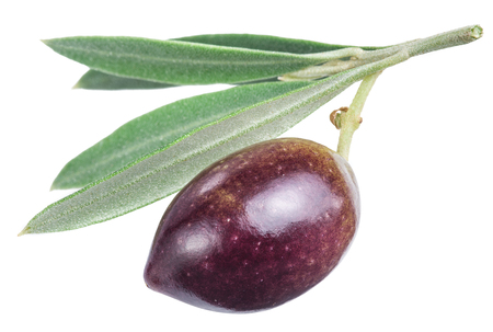 olive green: One olive berry with leaves on a white background. File contains clipping paths.