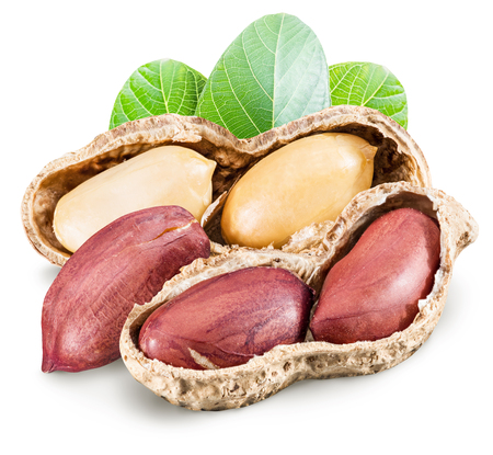 earthnut: Peanuts with leaves. File contains clipping paths.