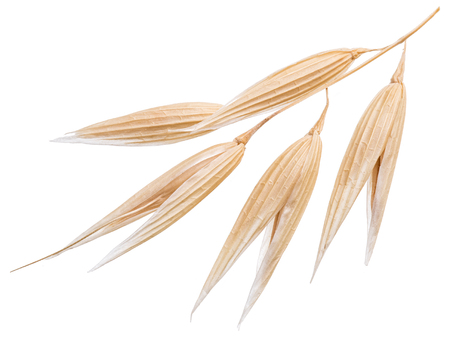 oat plant: Oat plant isolated on a white background. File contains clipping paths.