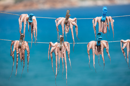 tourists: Fresh octopus in the boat port.