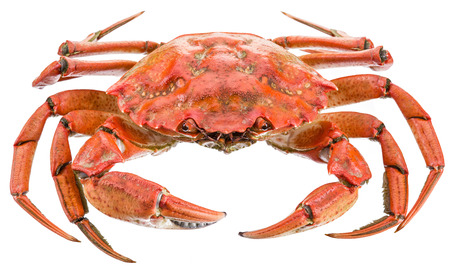 exoskeleton: Cooked crab.