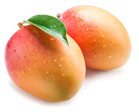 drupe: Mango fruits with water drops. Isolated on a white background. Stock Photo