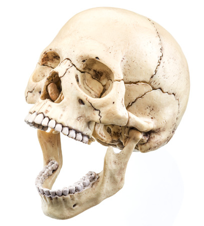 man made object: Skull model isolated on a white background.
