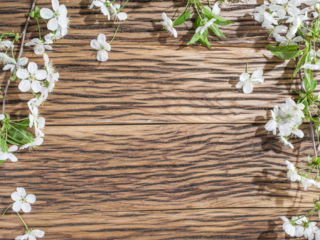 twig: Blooming cherry twig over old wooden table.