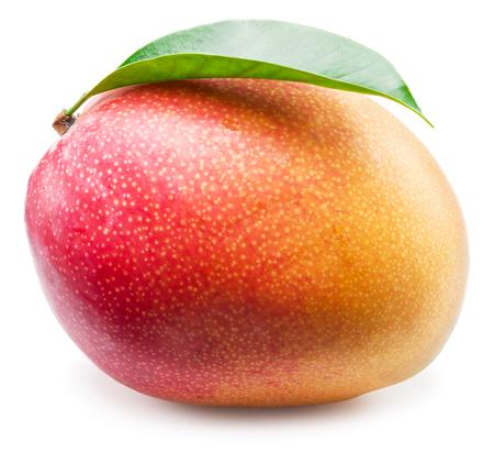 drupe: Mango fruit on the white background.
