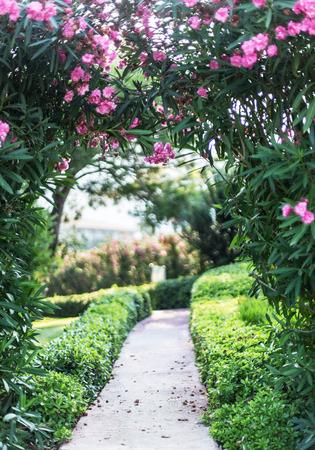 arreglo floral: arco de floración natural sobre la ruta en el jardín. Foto de archivo