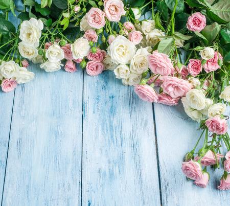 rosas frescas delicadas en el fondo de madera azul.