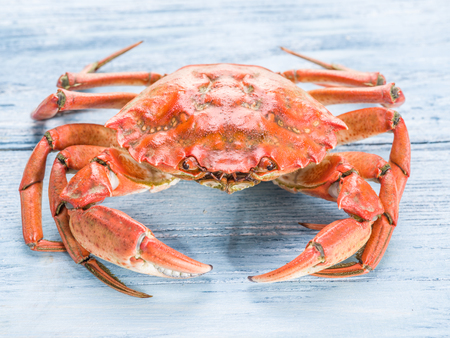 exoskeleton: Cooked crab on old blue wooden table.