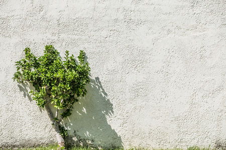 shrub: Green shrub near stucco wall. Stock Photo