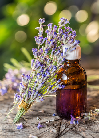 lavandula: Bunch of lavandula or lavender flowers and oil bottle are on the old wooden table. Stock Photo