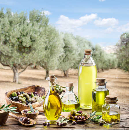 olives: Olive oil and berries are on the wooden table under the olive tree.