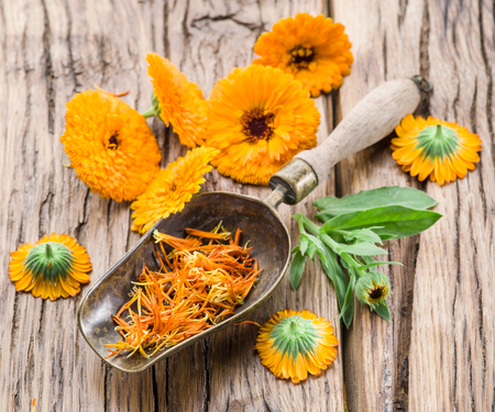 Calendula flowers on the old wooden table. Stock Photo