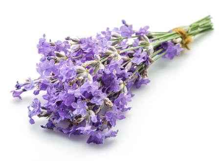 lavandula: Bunch of lavandula or lavender flowers isolated on white background.
