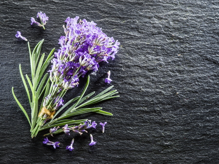 lavandula: Bunch of lavandula or lavender flowers on graphite board. Stock Photo