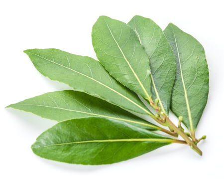 the bay: Bay leaf isolated on the white background.