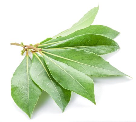 bay leaf: Bay leaf isolated on the white background.