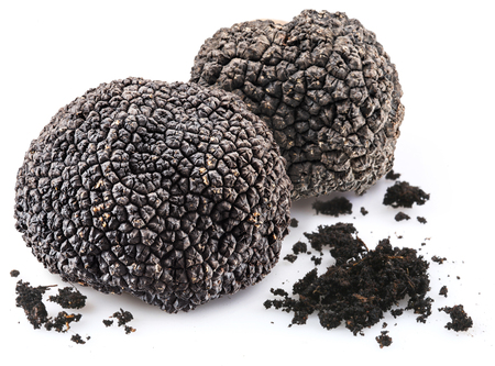Black truffles isolated on a white background. Stock Photo