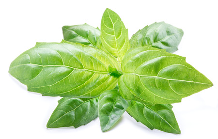 Basil leaves on the white background. Macro. Stock Photo