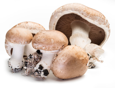 Champignon mushrooms on the white background.