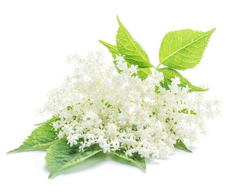 白い背景に花をエルダーベリー。