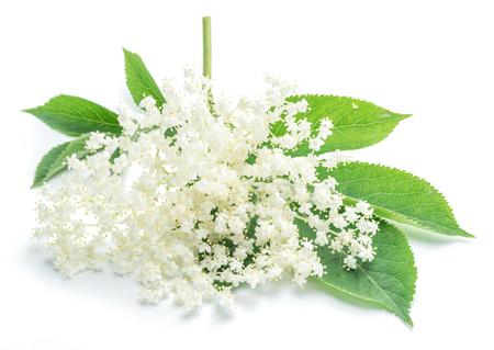 Elderberry bloemen op de witte achtergrond. Stockfoto