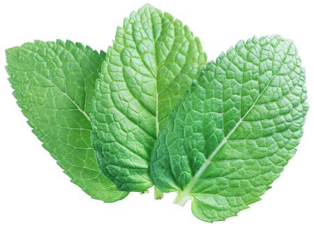 세 개의 스피어 민트 잎이나 민트 잎 흰색 배경에 고립.