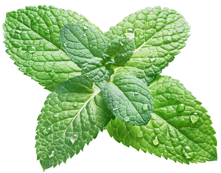 Spearmint or mint leaves with water drops on white background. Top view. Stock Photo