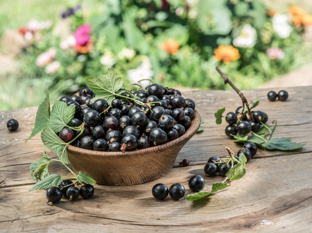 Black currant in the wooden bowl on the wooden table. Standard-Bild
