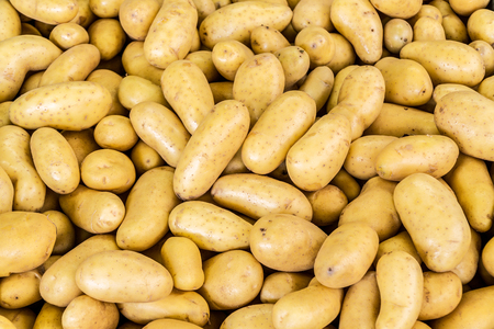 Lot of washed potato tubers. Food background.
