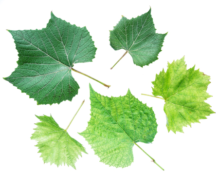 Grape leaves or vine leaves on the white background.