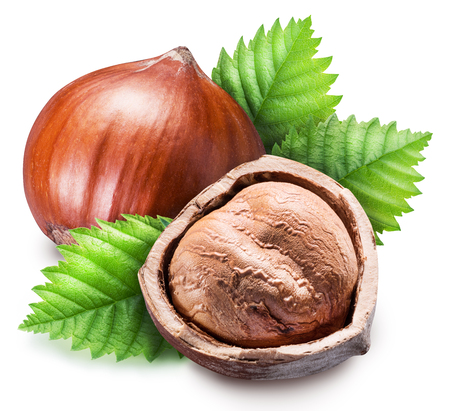 Ripe brown hazelnut and kernel of hazelnut. Clipping path.