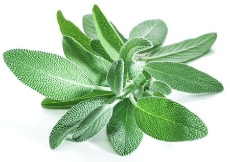 白い背景に庭セージの新鮮なベルベットの葉。 写真素材