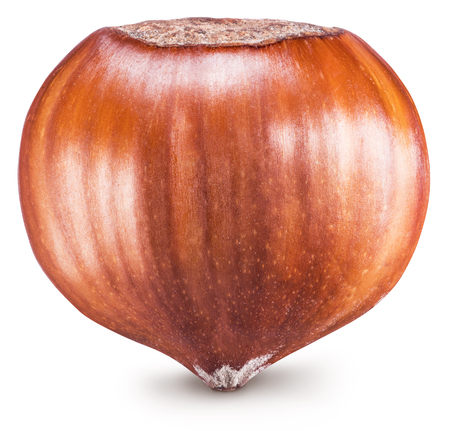 Macro picture of ripe brown hazelnut or filbert. Clipping path.