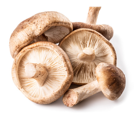 Shiitake mushrooms on the white background. Stock Photo