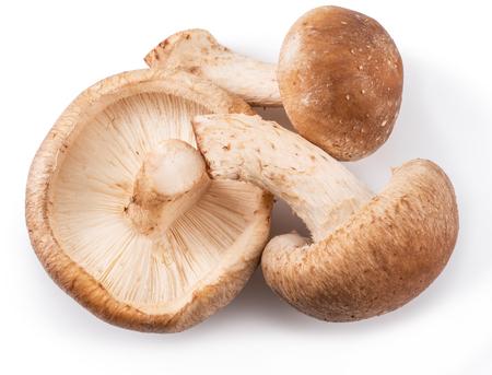 Shiitake mushrooms on the white background. Stock Photo