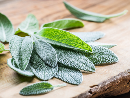 Fresh leaves of garden sage on the wooden background.