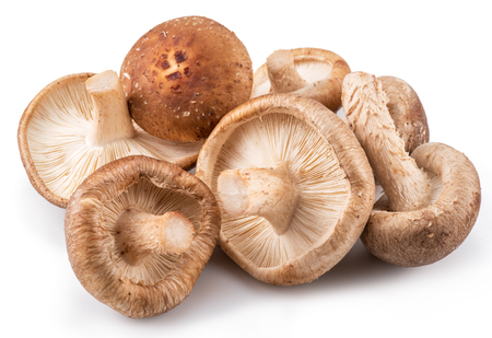 Shiitake mushrooms on the white background. Stok Fotoğraf