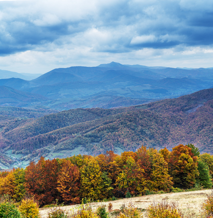Colorful trees and heavy clouds in the autumn mountains.