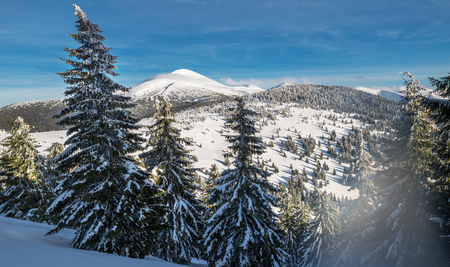 Mount Goverla, Ukraine. Beautiful winter landscape in the mountains. Tops of mountains covered with snow and green firs at the foothills. Stock Photo