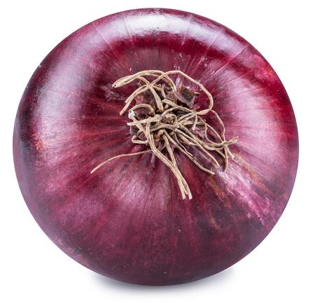 Red onion bulb bottom view.